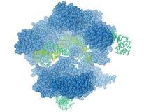 Protéine CRISPR/Cas9 Illustration de Vecteur