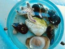 Protagonice los pescados, cáscaras del mar, y los cangrejos encontraron en la playa imágenes de archivo libres de regalías