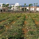 Protaras Południowy Cypr Zdjęcia Stock