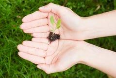 Proteção ambiental Imagem de Stock
