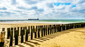 Proteção da erosão de praia com um grande cargueiro do oceano que vem do Mar do Norte no fundo e que dirige o porto de Vlissingen fotos de stock royalty free