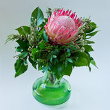 Protea Blossom Stock Photography