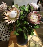 Protea Royalty Free Stock Images