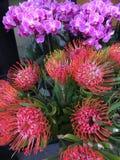 Protea en orchideebloemen Stock Foto