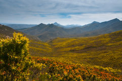 The protea filled robinson pass Stock Photography