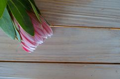 Protea flowers on a table. Protea flowers cut and lying on a wooden table Stock Photos