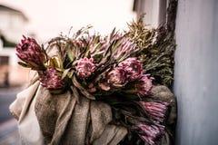 Protea grande rosado en una cesta al lado de la calle en el filamento de Blouberg fotografía de archivo
