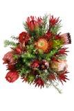 Protea kwiaty Zdjęcie Stock