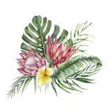 Protea Watercolor και ανθοδέσμη plumeria Το χέρι χρωμάτισε τα τροπικά λουλούδια και τα φύλλα που απομονώθηκαν στο άσπρο υπόβαθρο  ελεύθερη απεικόνιση δικαιώματος