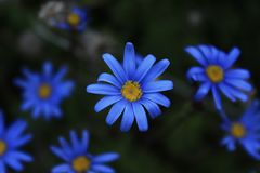 Proteas το φθινόπωρο στοκ εικόνα με δικαίωμα ελεύθερης χρήσης