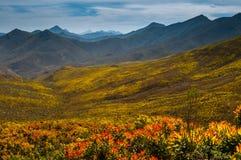 Proteas au-dessus d'un passage de montagne Images libres de droits