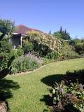 Proteas en un jardín Imagen de archivo libre de regalías