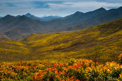 Proteas over a mountain pass Royalty Free Stock Images