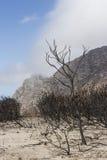 Proteas quemados durante un incendio fuera de control Foto de archivo libre de regalías