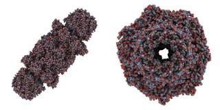 Proteasome gist Royalty-vrije Stock Afbeeldingen