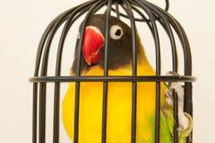 Protección animal Pájaro en una jaula fotos de archivo