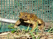 Protección de anfibios Foto de archivo libre de regalías