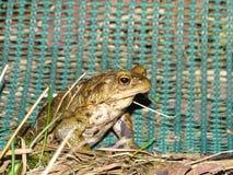 Protección de anfibios Imagen de archivo libre de regalías