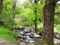 Protección de la biodiversidad y del paisaje en parque nacional de las montañas de Wicklow foto de archivo libre de regalías
