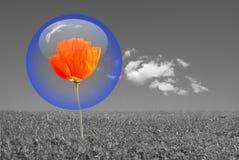 Protección de la burbuja Imagen de archivo
