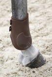 Protección del espolón para el caballo Fotos de archivo