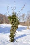 Protección joven del manzano en invierno Foto de archivo libre de regalías