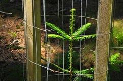Protección de las plantas joven del árbol Fotos de archivo libres de regalías