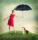 Proteching the Dachshund from the Rain Stock Image