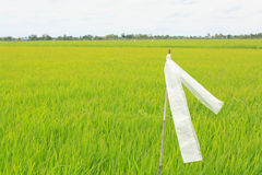 Protect Bird. Equipment  on Rice Farm protect Bird Royalty Free Stock Image
