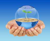 Protect the earth. Hands holding sapling in soil Stock Image