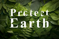 Protect earth concept of wild green jungle foliage. Royalty Free Stock Image