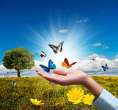Protect environment. Concept with flower and butterfly Stock Photography