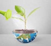 Protect the environment concept earth with tree Stock Photo