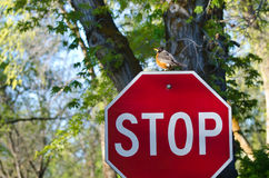 Protect the Environment – Robin and the Stop Sign Stock Images