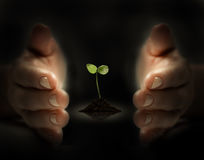 Protect the future. Young plant is protected  by hands Royalty Free Stock Photos