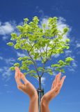 Protect the nature. Hands and tree on the blue sky stock photos