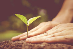 Protect nature. Growing a plant. Hands holding and nurturing tree growing on fertile soil  / nurturing baby plant / protect nature / Agriculture Royalty Free Stock Photos