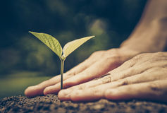 Protect nature. Growing a plant. Hands holding and nurturing tree growing on fertile soil  / nurturing baby plant / protect nature / Agriculture Royalty Free Stock Photography
