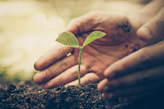 Protect nature. Hands of farmer growing and nurturing tree growing on fertile soil with green and yellow bokeh background / nurturing baby plant / protect nature Stock Photo