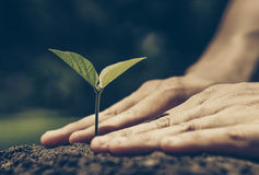 Protect nature. Hands of farmer growing and nurturing tree growing on fertile soil with green and yellow bokeh background / nurturing baby plant / protect nature Stock Images