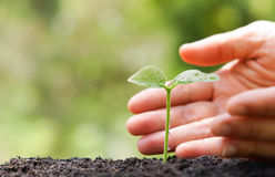 Protect nature. Hands of farmer growing and nurturing tree growing on fertile soil with green and yellow bokeh background / nurturing baby plant / protect nature Royalty Free Stock Photography