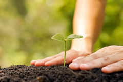Protect nature. Hands of farmer growing and nurturing tree growing on fertile soil with green and yellow bokeh background / nurturing baby plant / protect nature Stock Image