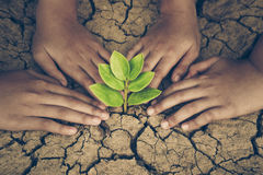 Protect nature. Hands of young people looking after a young green plant growing on dry, cracked ground. Protect nature stock photography