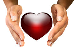 Protect your heart. Female hands protecting heart shape over white background Stock Image