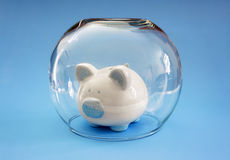 Protect your money. Fish bowl covering a piggy bank concept for protecting your assets, financial help, insurance and investment Royalty Free Stock Photo