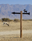 Protected animals in Hai-Bar reservation, Eilat Royalty Free Stock Images