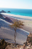 The protected area of Qalansia beach, sand dunes and a tree, Socotra, Yemen Stock Photography