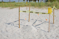 Protected Sea Turtle Nests. On the beach royalty free stock photos