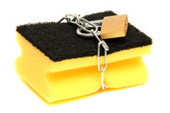 Protected sponge Stock Images