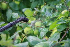 Protecting apple tree from fungal disease or vermin by pressure sprayer with chemicals. Apple tree is protected from fungal disease or vermin by pressure sprayer royalty free stock photos